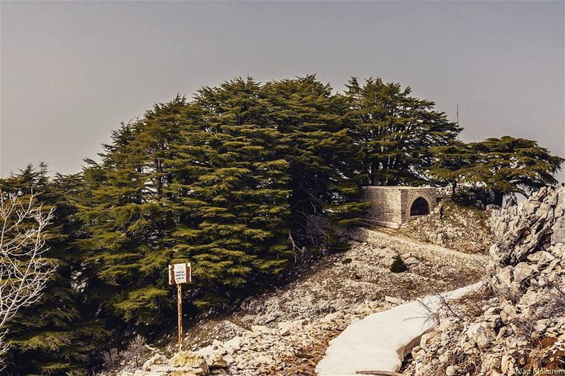 Arz Jaj, Lebanon lebanon hiking nature outdoors livelovelebanon ... (Arez Jaj)