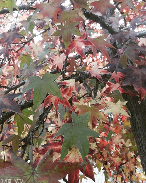 The leaves are changing; I feel poetry in the air - Laura Jaworski travel... (Brummana)