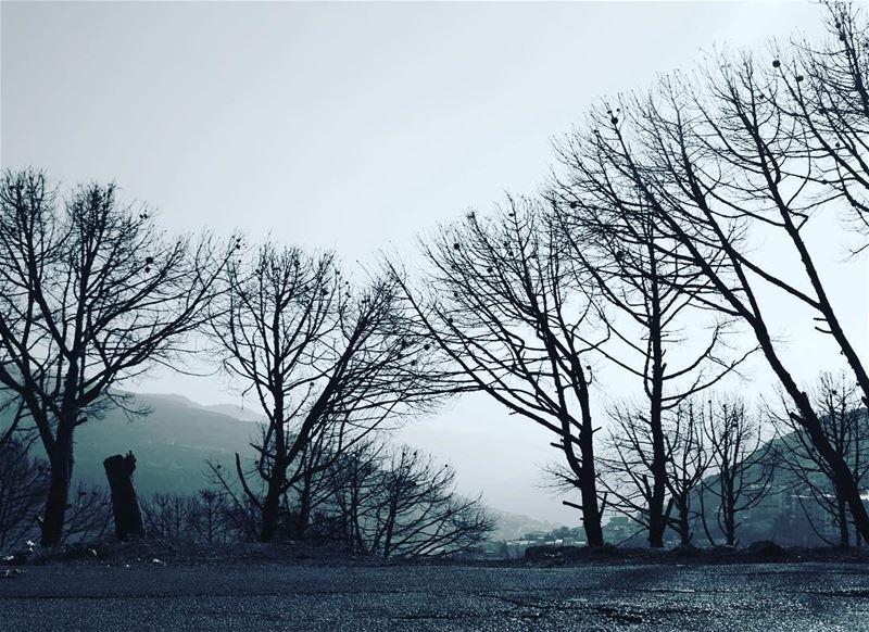 Life starts all over again... trees seasons seasonchange ...