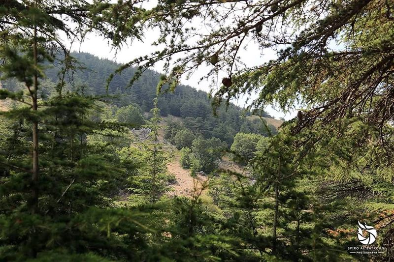 SpiroAlBatrouniPhotography Spirolens landscape landscape_lovers ... (Barouk Forest)