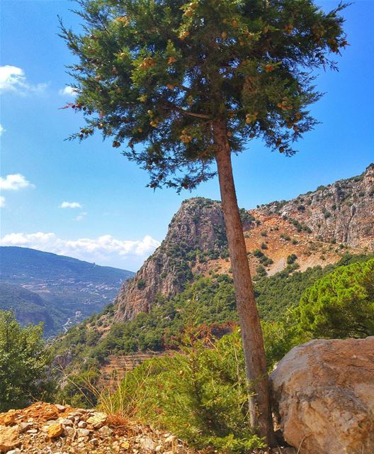 Beautiful nature 🌲 lebanon nature naturelovers natureporn landscape ... (Zgharta)