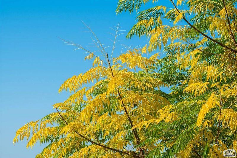 هلا بالخريف 🍂🍂🍂 autumn nature tree leaves lebanon southlebanon ...