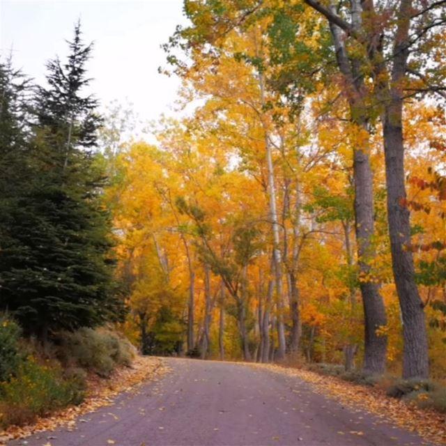🔸🔸🔸🔸🔸🔸🔸🔸🔸🔸🔸🔸🔸🔸🔸🔸🔸 lebanon autumn nature naturelovers... (El Laklouk, Mont-Liban, Lebanon)