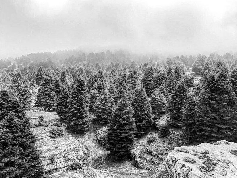 lebanon blackandwhiteonly forest instagood wanderlust travelgram ...