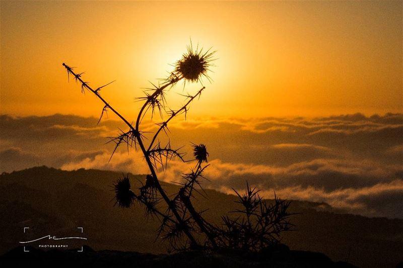 Chasing sunsets ❤☀ (Qanat Bakish, Mont-Liban, Lebanon)