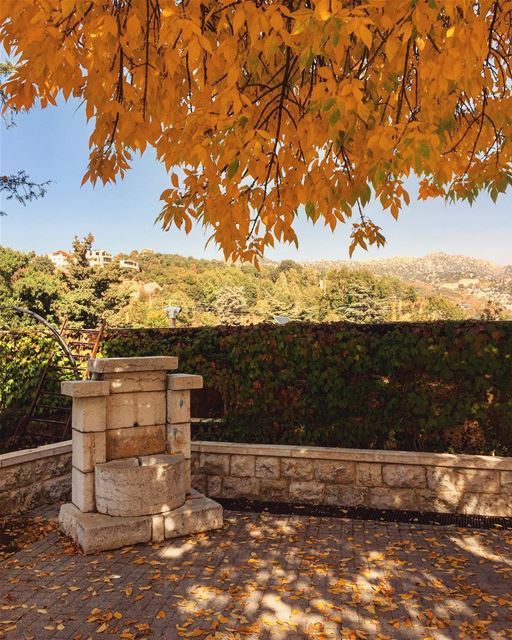 Good evening 🍂........ leaves fall season nature tree ... (Ehmej, Mont-Liban, Lebanon)