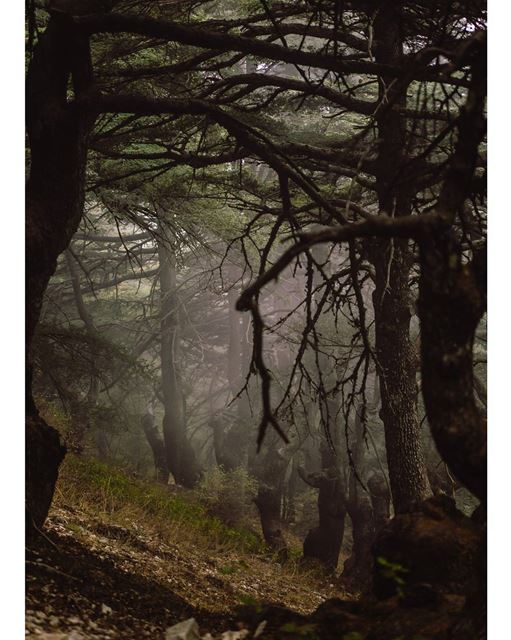 Go where you feel most alive...... nature naturephotography... (Arz el Maasser)