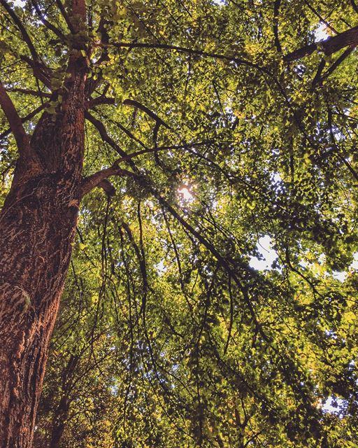Allow nature's peace to flow into you as sunshine flows into trees 🌳🌳☀️🌳 (Jesuit Convent Deyr Taanayel - دير سيدة التعزية للآباء اليسوعيين)