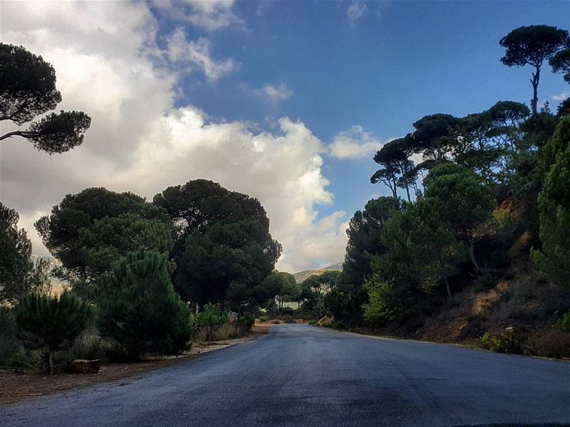 When this is your way home after a busy day at work😍🌳🌳 Nature ... (Bkâssîne, Al Janub, Lebanon)