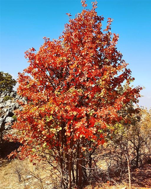 A sweet reminder of back home🍁🍁 autumn trees hiking mountains bekaa... (Maasser Ech Chouf, Béqaa, Lebanon)