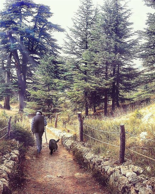-A Walk to Remember -... cedars cedarsofgod livelovecedars ... (Cedars of God)