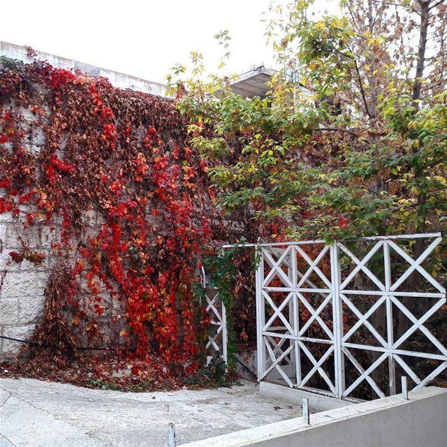 ehden autumn liveloveehden lebanon ... (Ehden, Lebanon)
