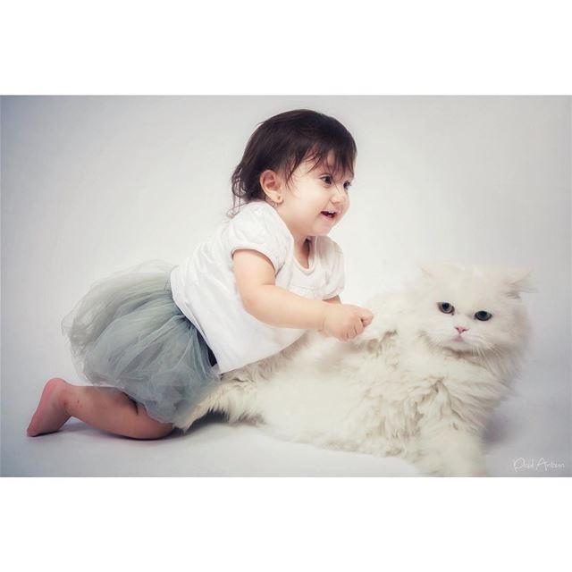 cake photoshoot جوري dream cat birthday playing smile oneyearold ...