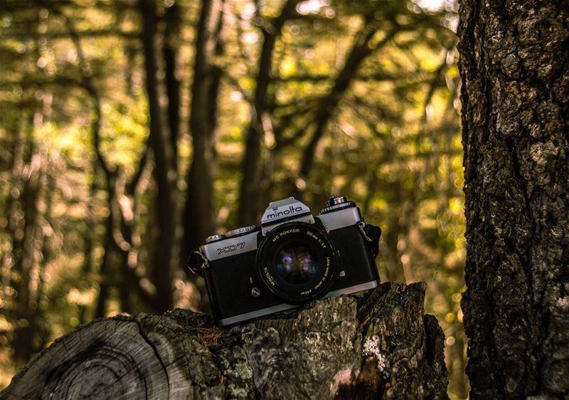 The camera basically is a license to explore📸..... camera oldcamera... (Arz Tannoûrîne)