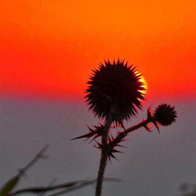 Sunset is still my favorite color.~~~~~~~~~~~~~~~~~~ nikontop_ ... (Baakline, Mont-Liban, Lebanon)