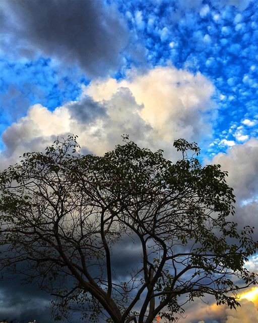 lebanon beirut November autumn sky clouds tree nature nostalgia ...