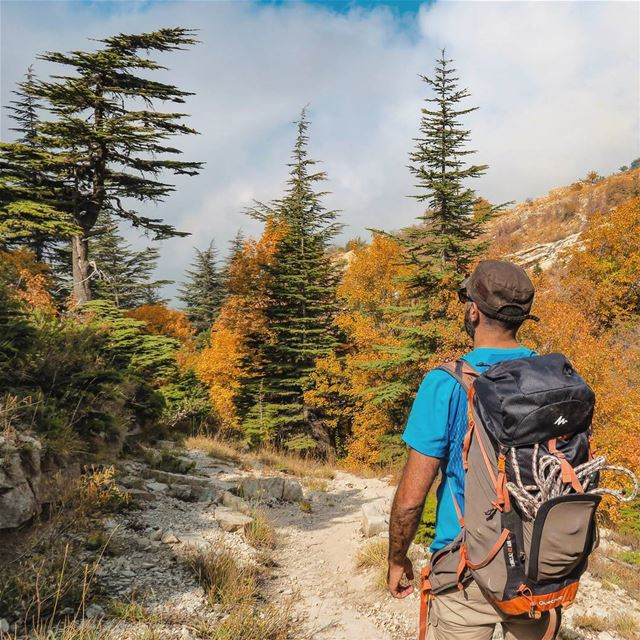 Irresistible Changes 🚶🌲🍁🍂 hike hiker backpack nature outdoors ... (Horsh Ehden)