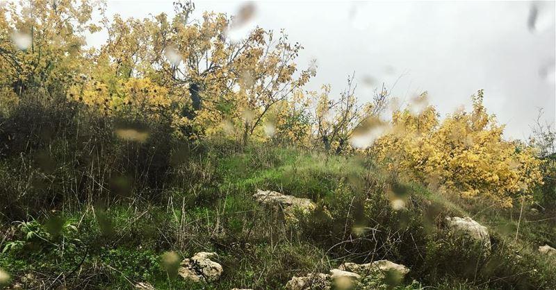 Hello november . leavesfall yellowleaves🍂 leavesfallingdown ... (Annâya, Mont-Liban, Lebanon)