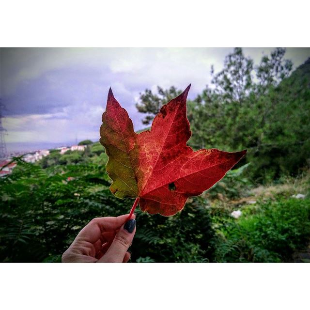 When you're obsessed with this season🍁 - Ain Saade favorit season... (Aïn Saâdé, Mont-Liban, Lebanon)