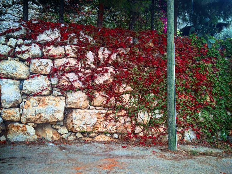 | Fall colours| 🍁🍂 fall autumn october best season lebanon... (Ain Saadeh)