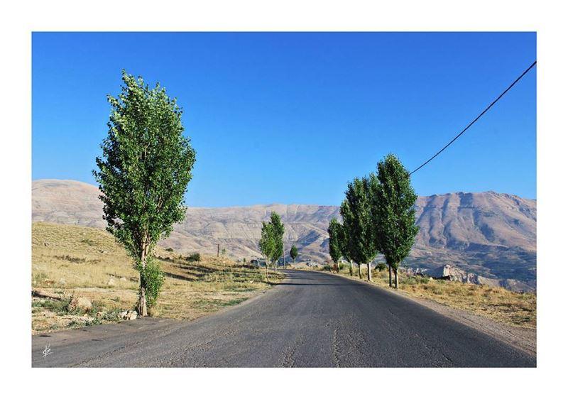 🎶🚙 (Lebanon)