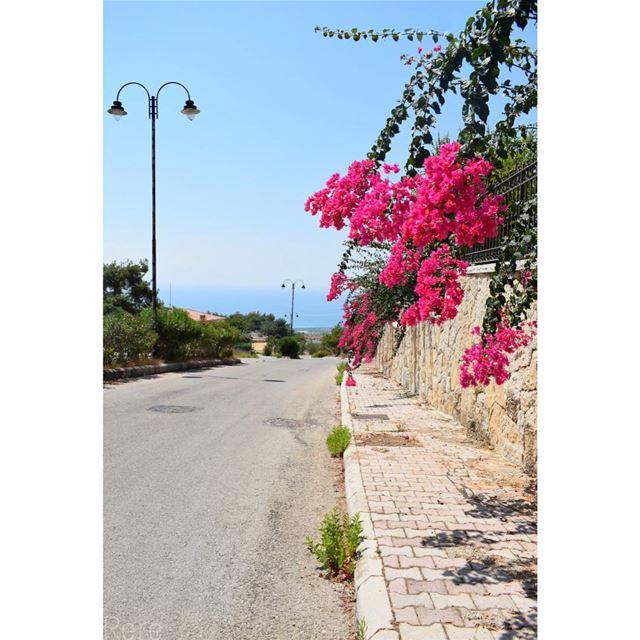 تتدلى أشواقنا خارج الفناء لتحوم على طرقاتكم...ريم 🌺 whatsupplebanon ... (Al-Mushrifah)