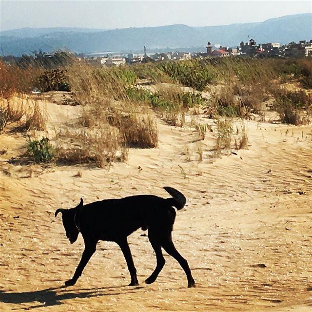 Lumumba scouting around Rashidiya streetphotography palestinianrefugees ... (Tyre Coast Nature Reserve - محمية شاطئ صور الطبيعية)