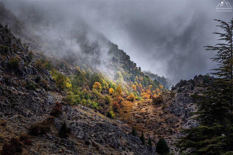 A Fall Scenery under the fog invasion. fog lebanon ehmej mountain ... (Ehmej, Mont-Liban, Lebanon)