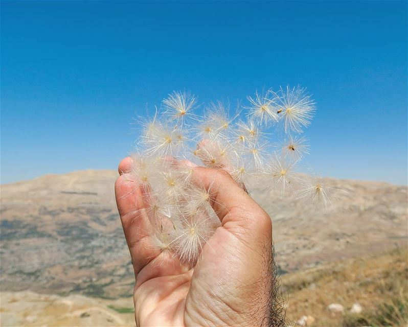 It felt like magic ✨ hike outdoors nature fluffy hand grab magic ...