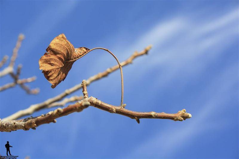 Hello November.. november fall chouf lebanon_hdr lebanonbyalocal ...