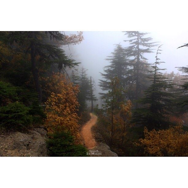 ehden ehdenreserve road nature trees forest fog autumn colors ...