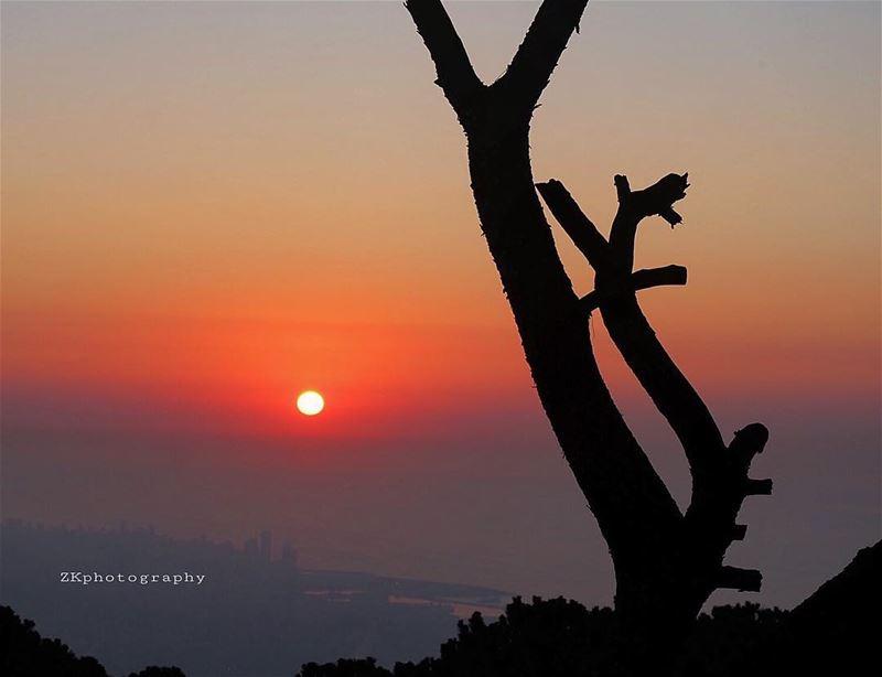 كلُّ قصيدةٍ هي بدايةُ الشعركلُّ حبٍّ هو بدايةُ السماء.تَجذري فيّ أنا ال (Broummâna, Mont-Liban, Lebanon)