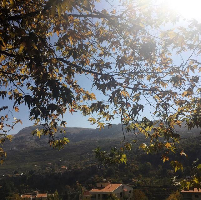 The caress of an autumn sun on yellowing leaves tree landscape ... (Lebanon)