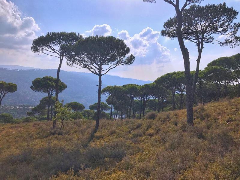 Morning from Salima🏞..... earthpix earthofficial ... (Salima, Mont-Liban, Lebanon)