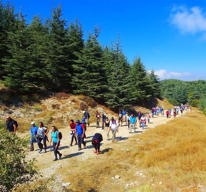 hikinglebanon fall autumn hiking lfl nationalgeographic ... (Al Shouf Cedar Nature Reserve)