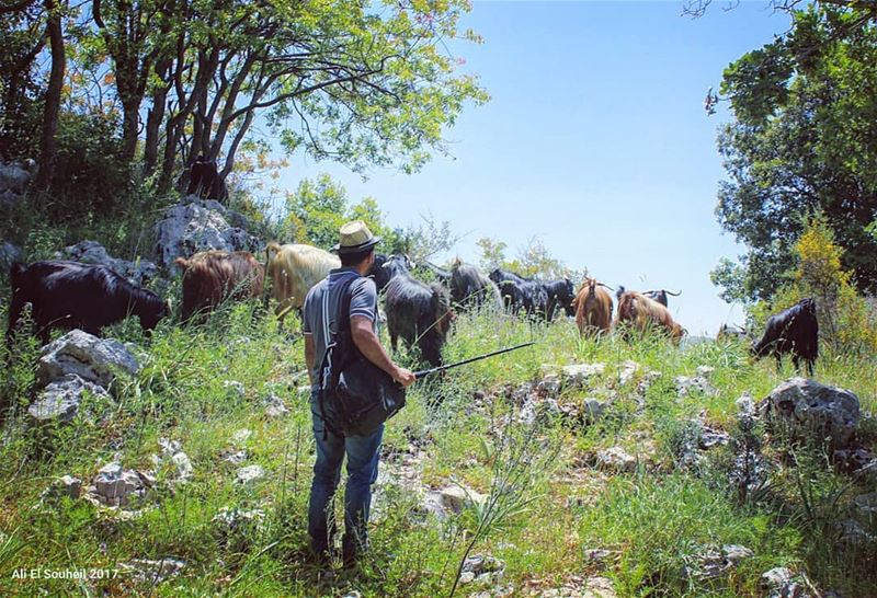tb jabalmoussa mountlebanon nature trees goats goatherd sky ...
