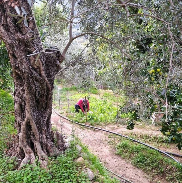 nature trees naturelovers lebanon amazingday lovelyplace lovelytime... (Basateen, Lebanon)