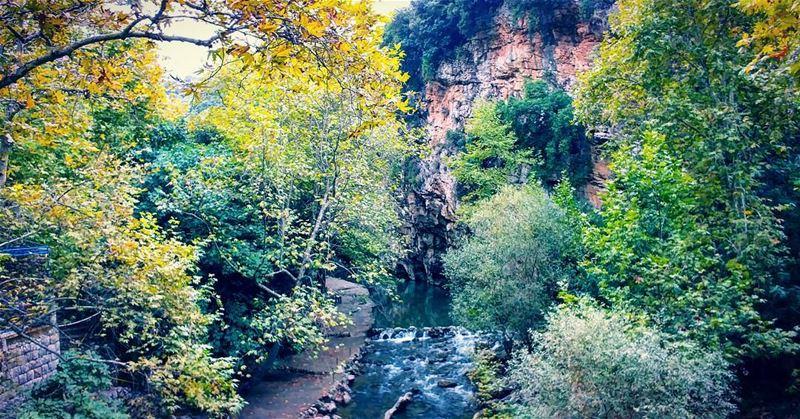 fiftyshadesofgreen 🍃... nature river leaves trees ...