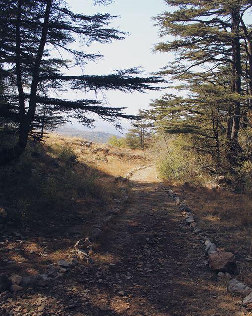 October is over 🍂 Lebanon livelovelebanon nature photography trees ... (Tannurin At Tahta, Liban-Nord, Lebanon)
