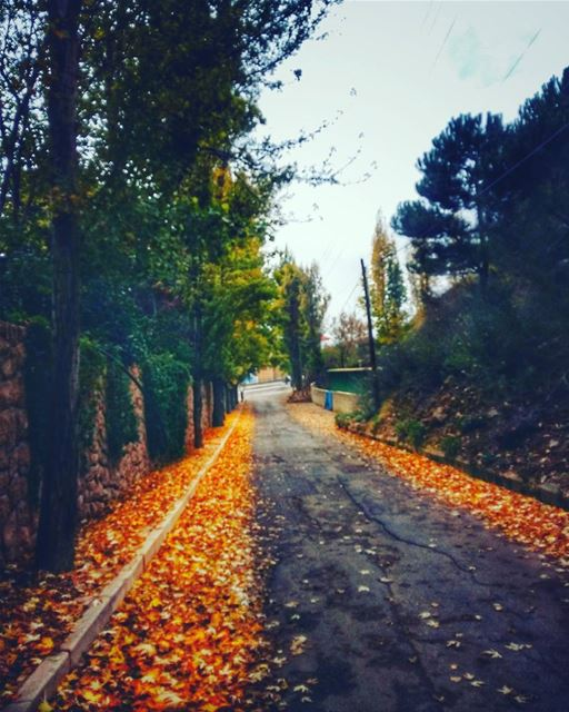 autumn autumnleaves🍂 autumnleaves trees treescollection rsa_trees ... (Ehden, Lebanon)
