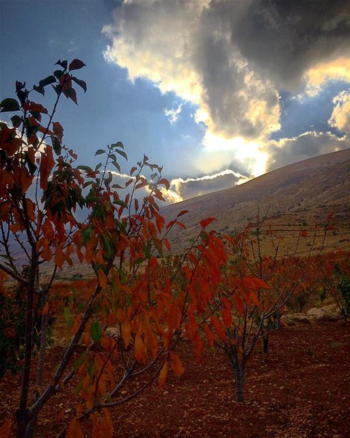 Fall in Love with Moments 🍂🌥 natureoftheplanet1 lebanoninapicture ... (Beqaa Governorate)