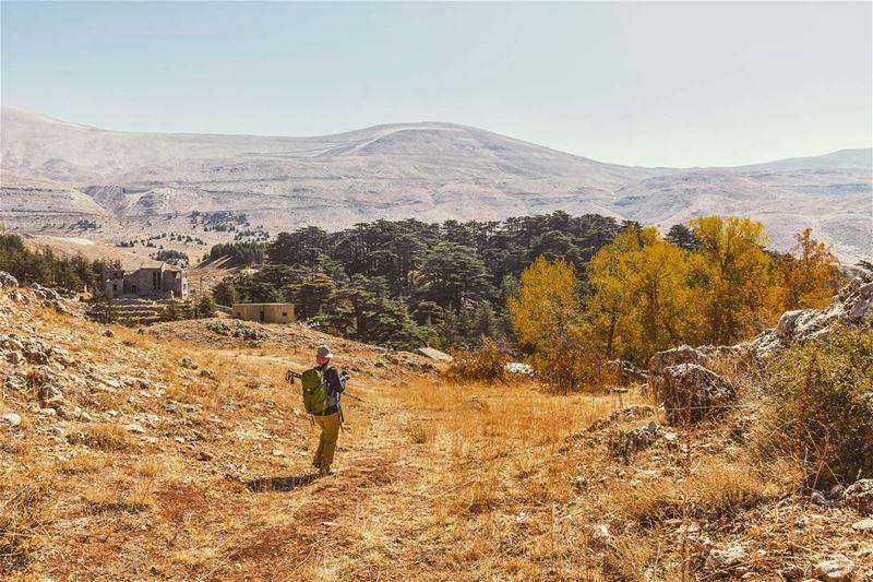 Location : El Arz, Lebanon earthpix earthofficial exploretocreate ... (Cedars of God)