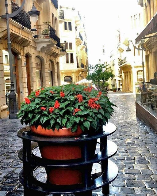 Good morning everyone 💚 beirutdowntown lebanon insta_lebanon ... (Downtown Beirut)