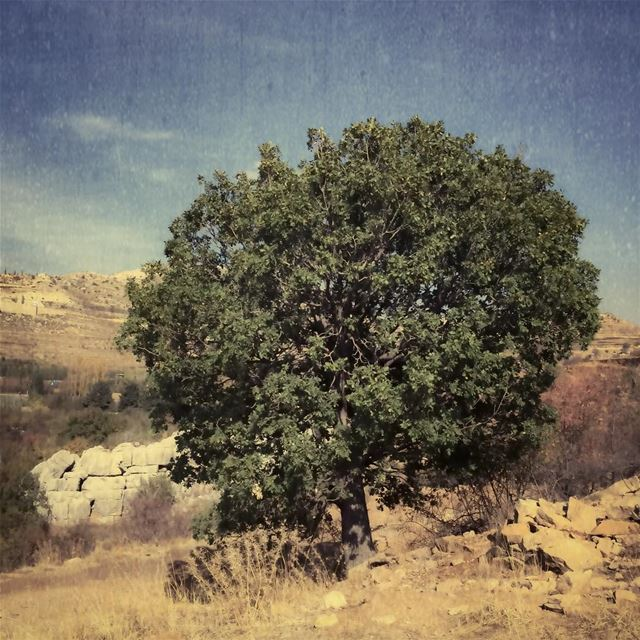 Single tree treeoflife naturelover landscape rural_love treescape ...