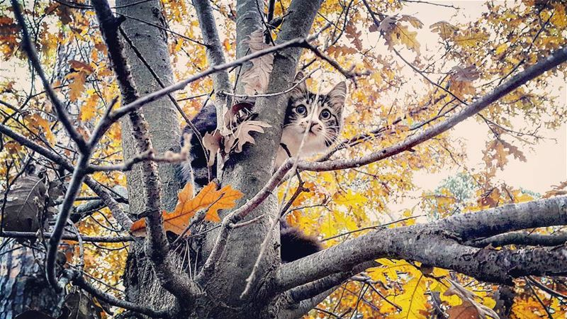 🍁Peekaboo🍁🐈--- LaMaisonDeLaForet Kitty Cat Fall Autumn Peekaboo ...