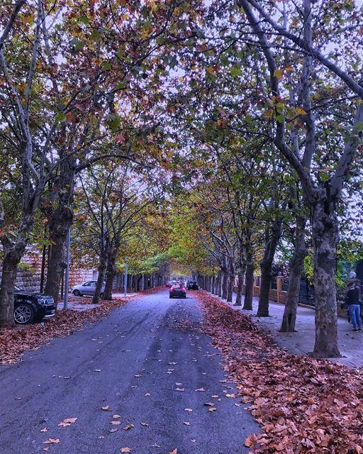 🙈إخلعي ملابسك أيّتها الأشجار (لبنان كورنيش صوفر)