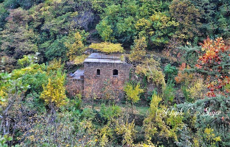 fall fall🍁 winter instagood dead nature lebanon najib_sinjer ... (Wadi Qannubin, Liban-Nord, Lebanon)