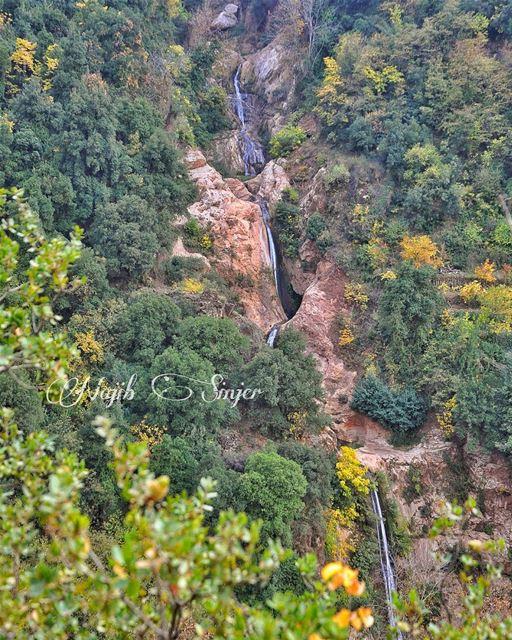 fall fall🍁 winter instagood dead nature lebanon najib_sinjer ...