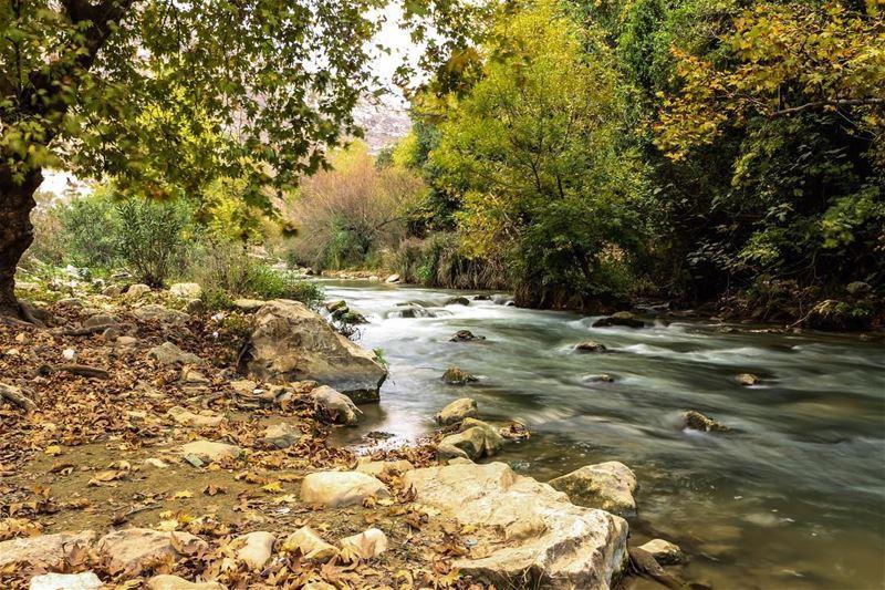 🍂🍁... photography photographer photooftheday landscape... (Zawtar Al Gharbiyah, Al Janub, Lebanon)
