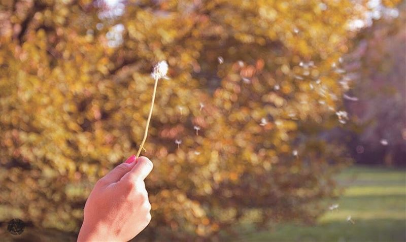 """""""The answer, my friend, is blowing in the wind."""" B.D. wind blow autumn ..."""